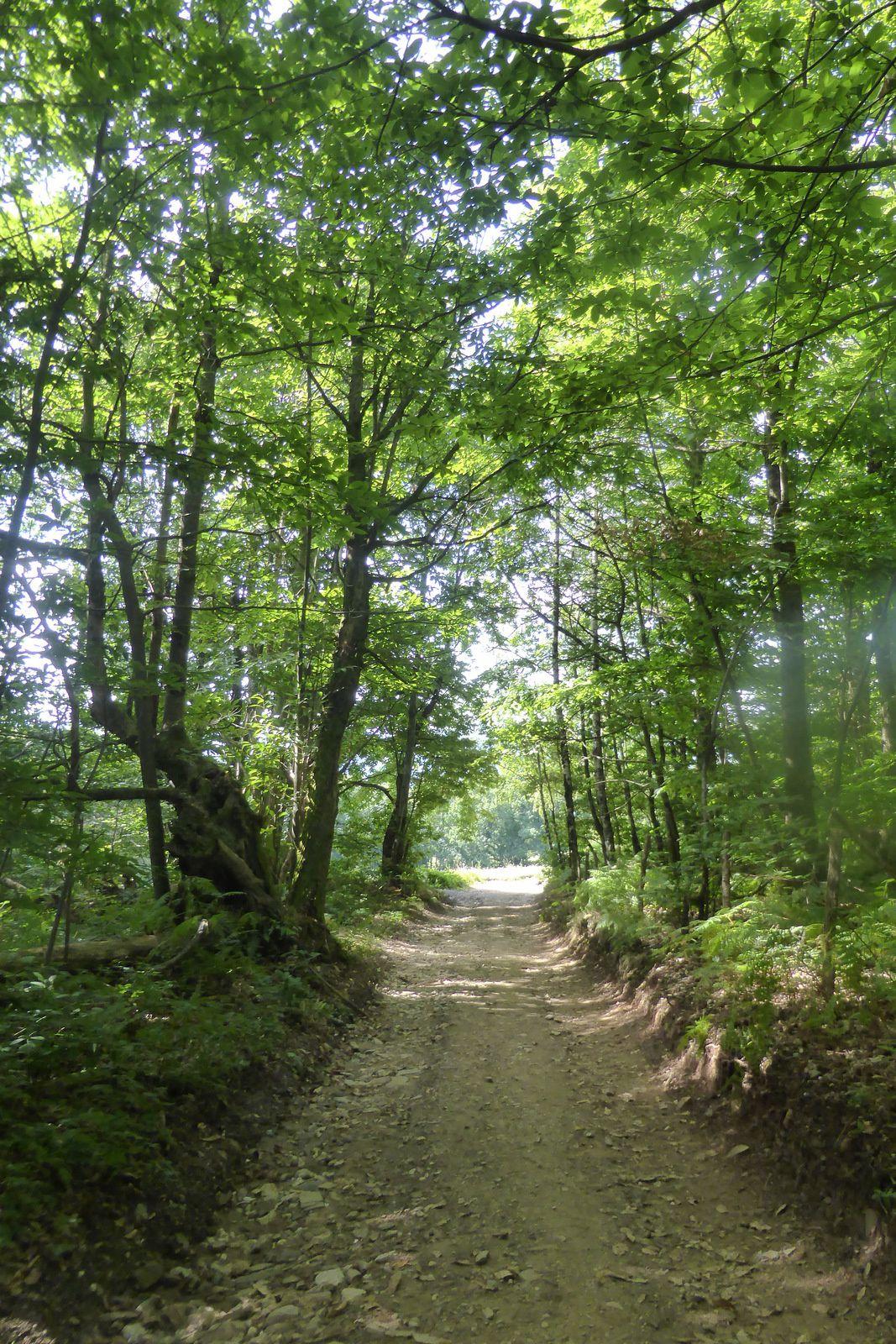 Mélange de zone dégagée et de forêt, notre chemin continue dans un décor naturellement majestueux.