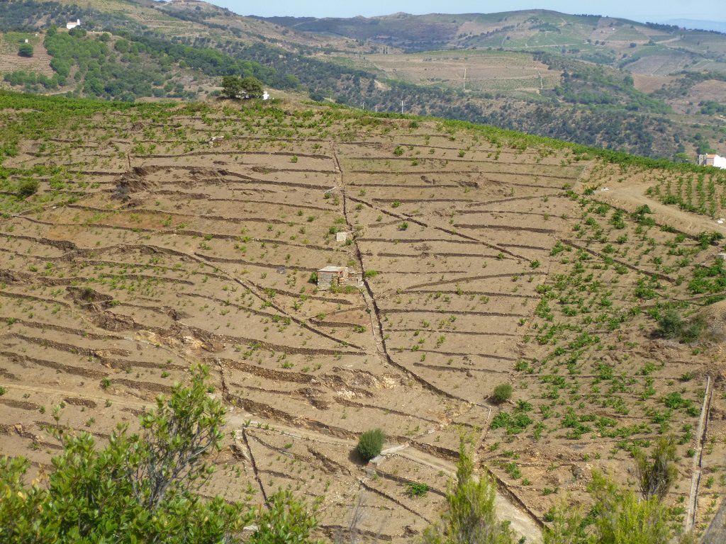 Dès l'Antiquité, la vigne est cultivée sur les pentes dominant la Méditerranée avec de nombreux réseaux de rigoles.
