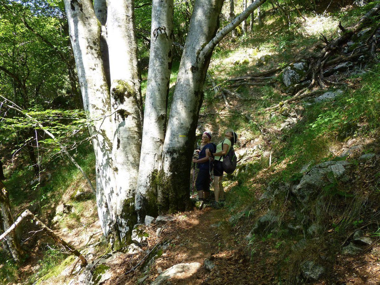 Beau sentier façonné par l'homme le long de la falaise sur plusieurs kilomètres.
