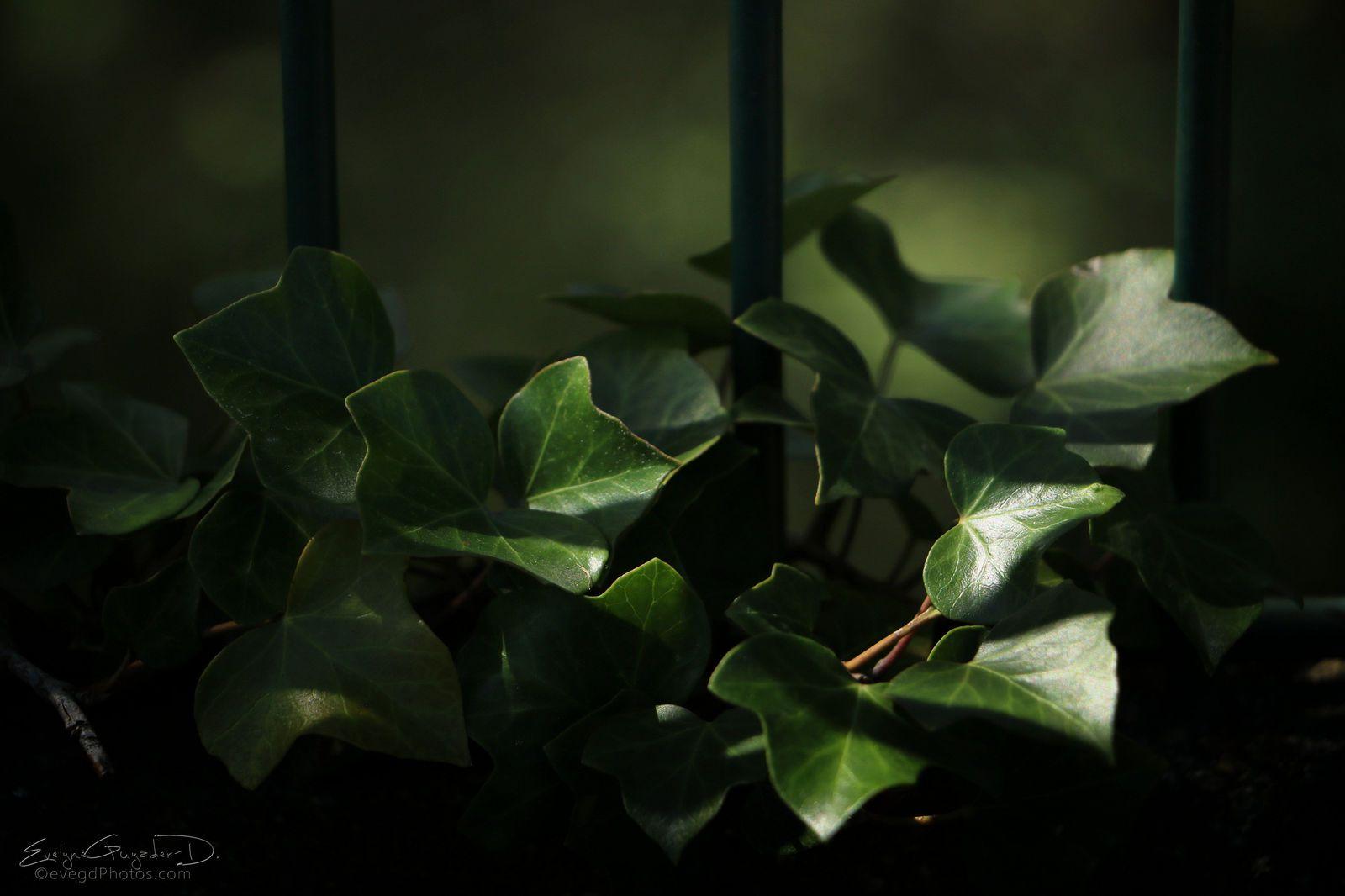 Du Vert en clair obscur..