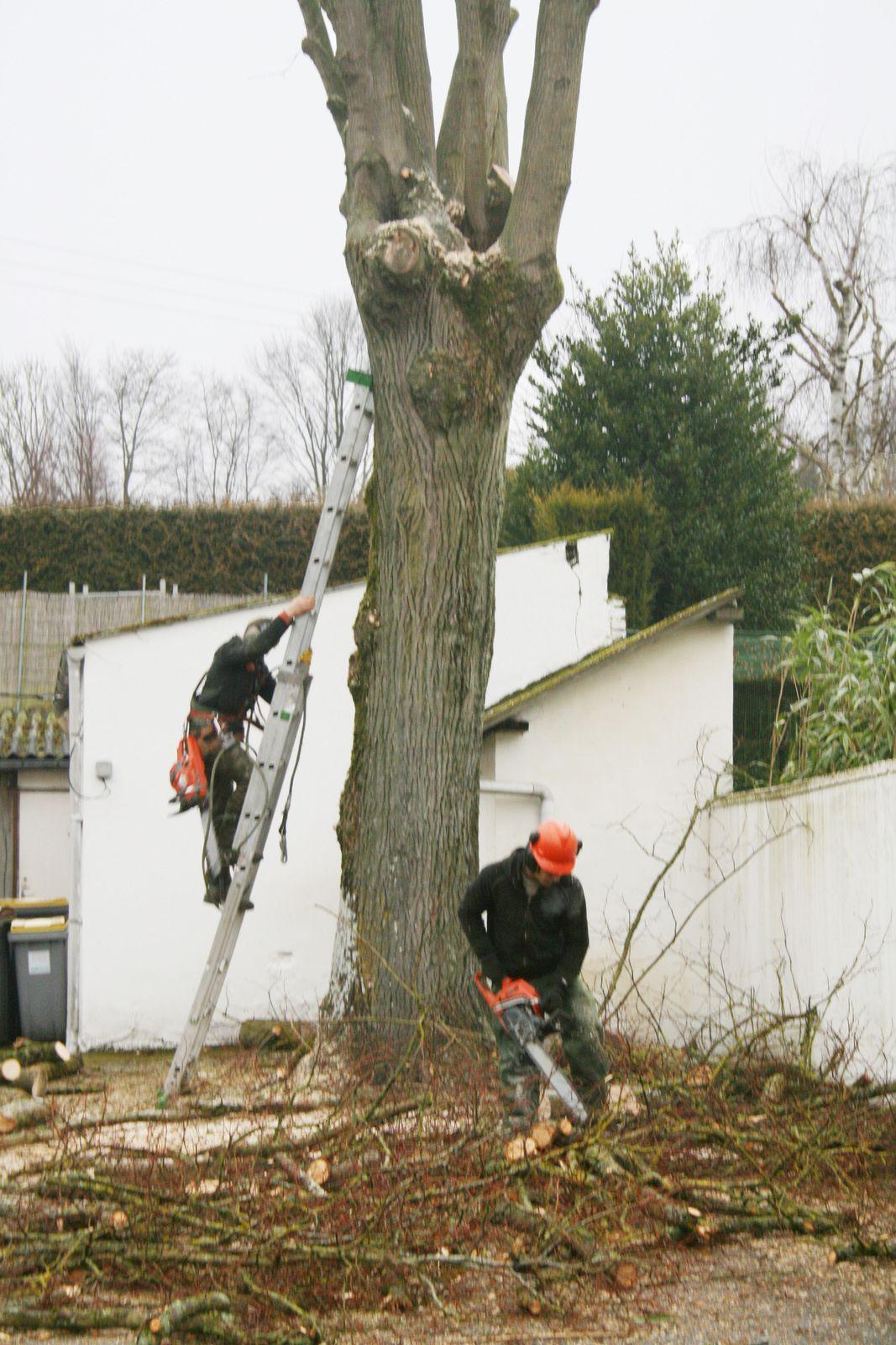 Arboriste grimpeur : plus qu'un métier, un art ….