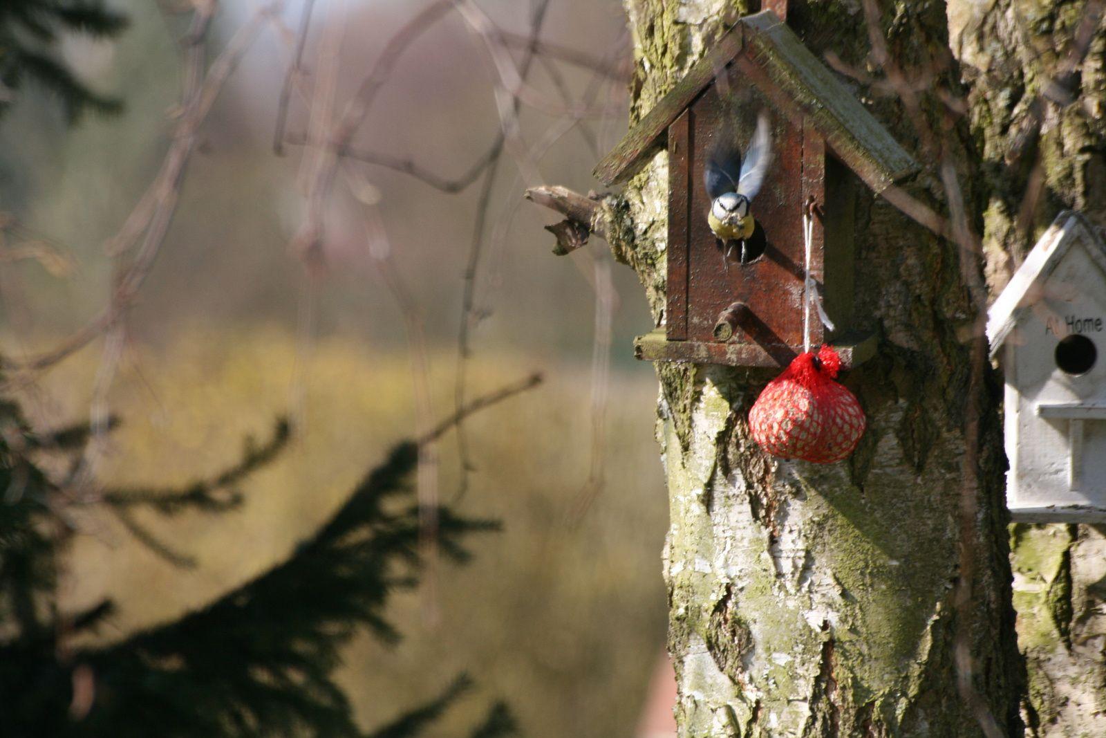 L'hiver approche, comment nourrir les passereaux du jardin.