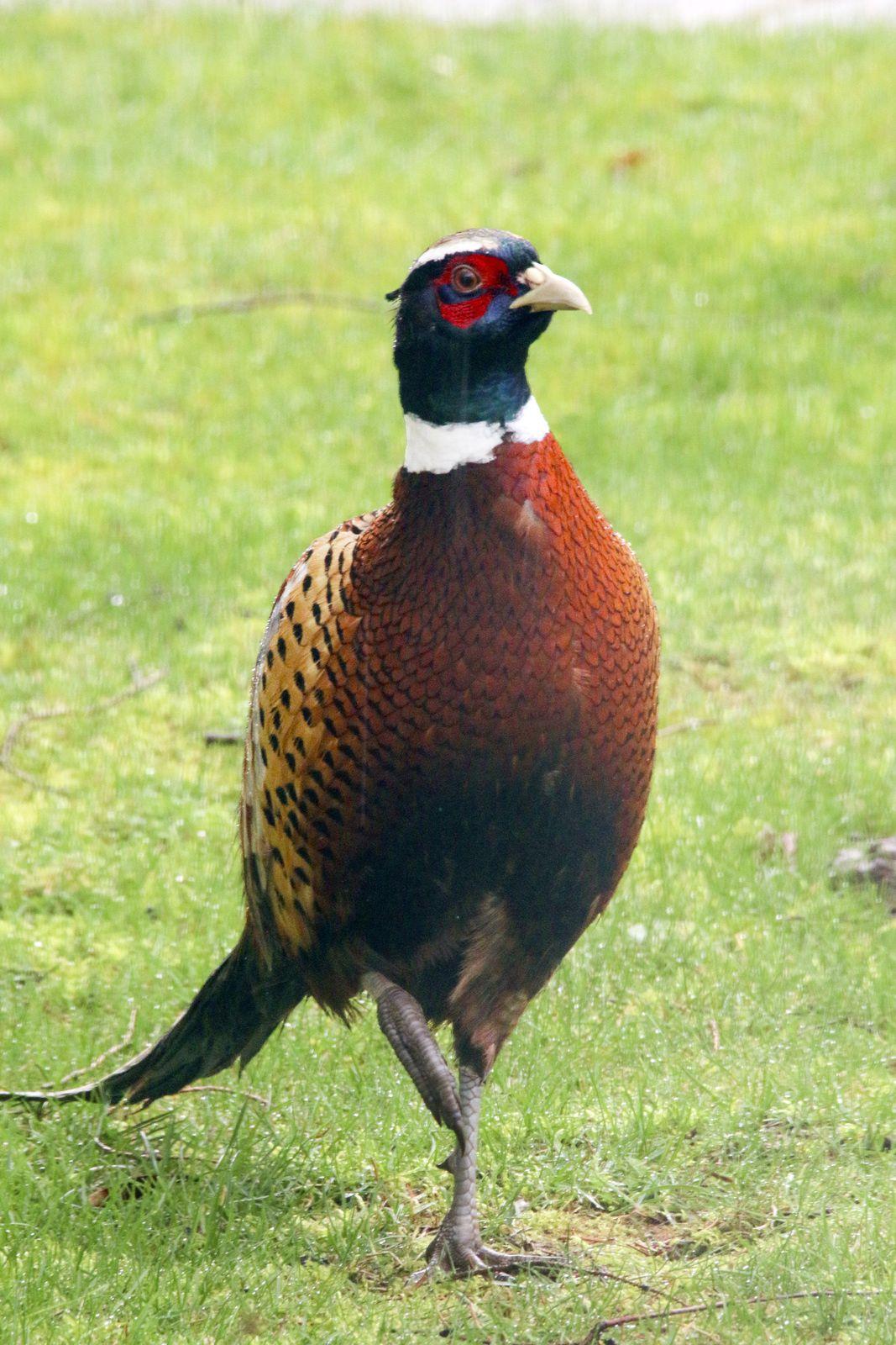 Un bien bel oiseau !