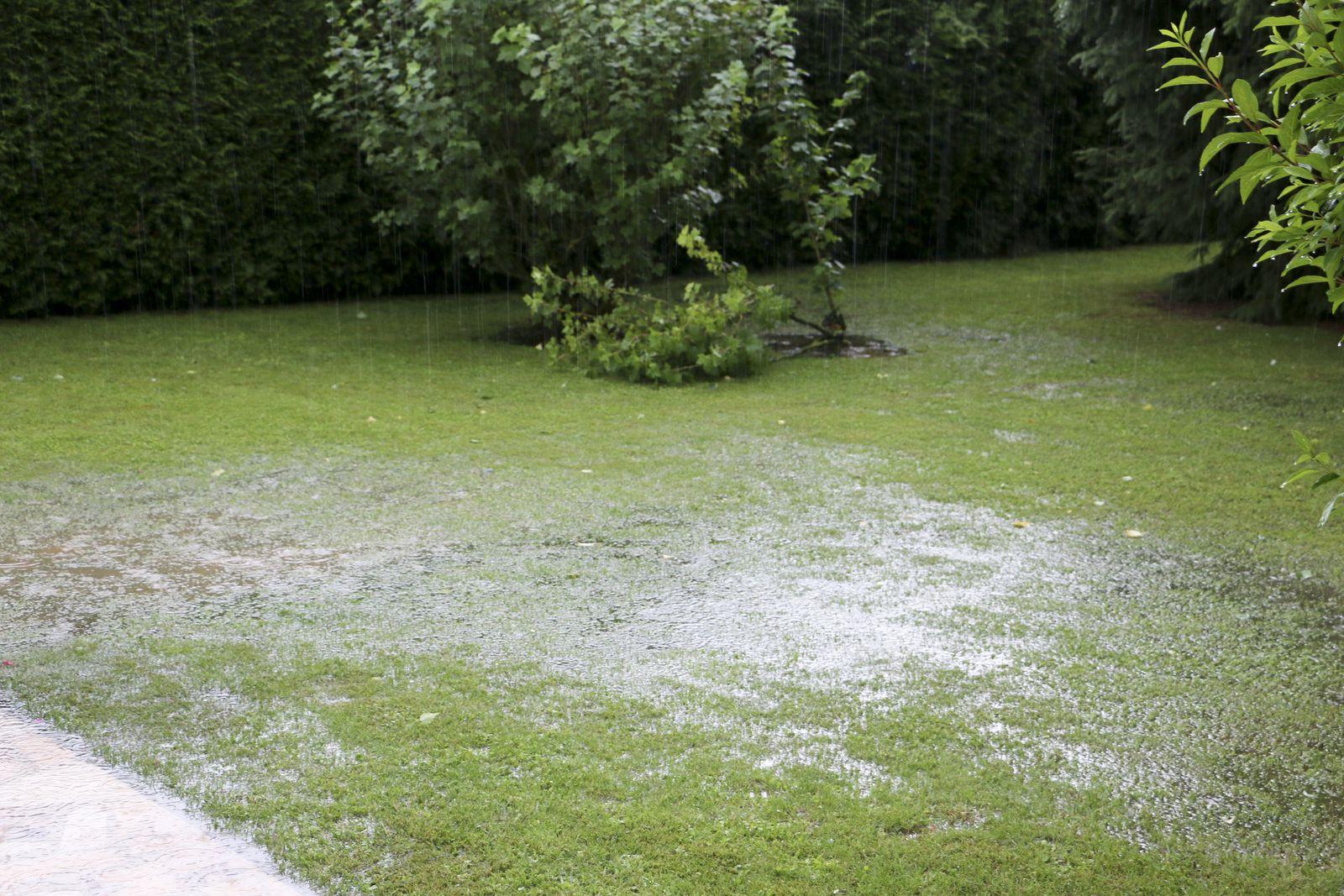 Les terres sont saturées depuis des mois de pluie incessante.