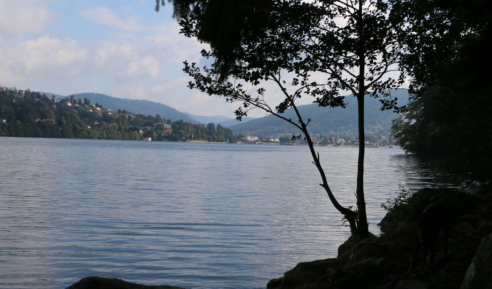 Vue de l'extrémité du lac de Gérardmer, la ville en fond d'image.