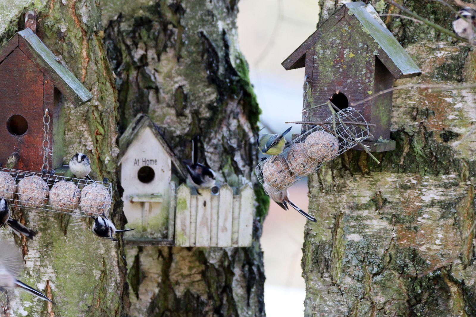 Le froid est là, pensez à nourrir les oiseaux du jardin !
