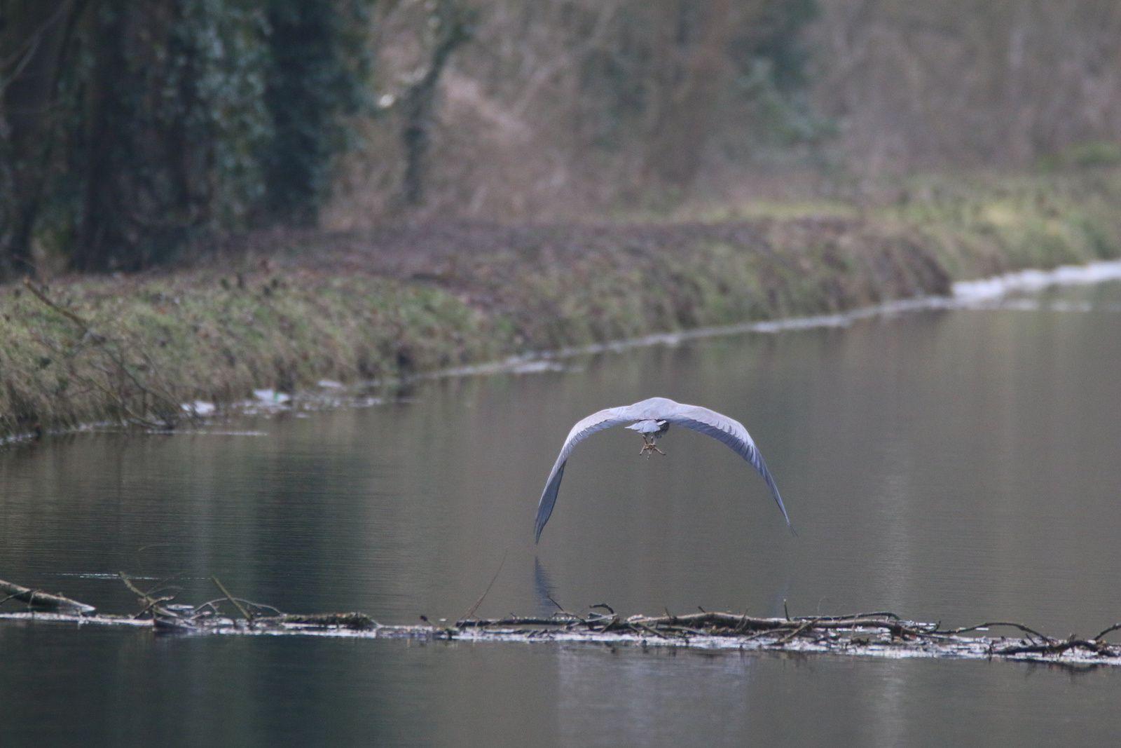 Leurs larges ailes les emportent en un vol lent et majestueux au fur et à mesure de notre progression..