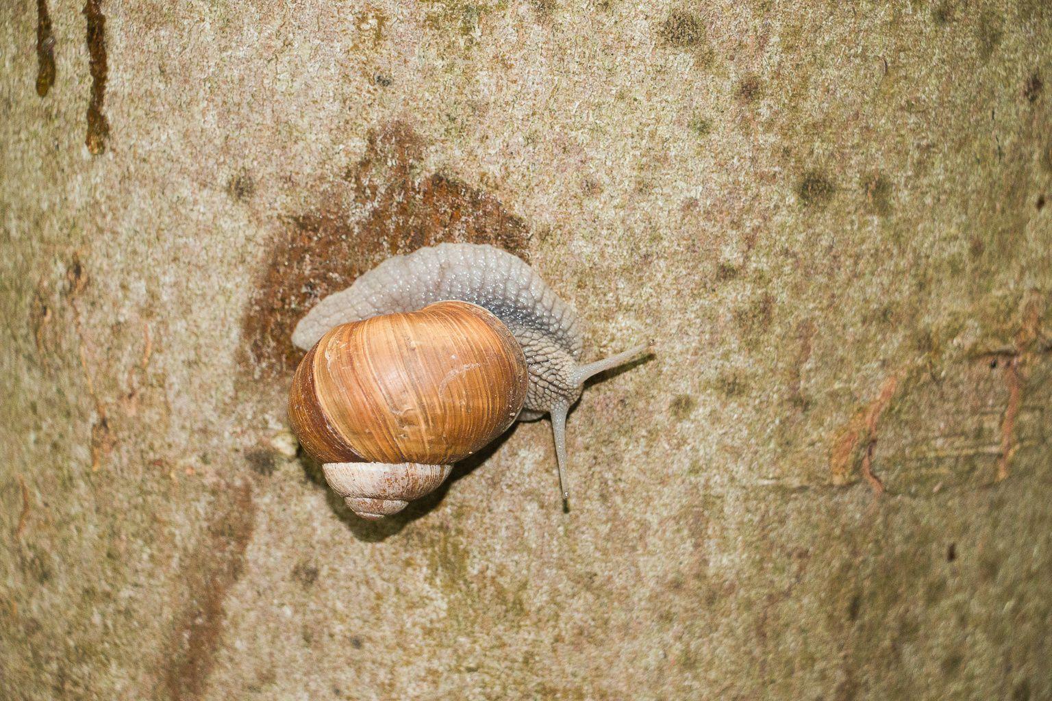 Escargot sur un arbre.