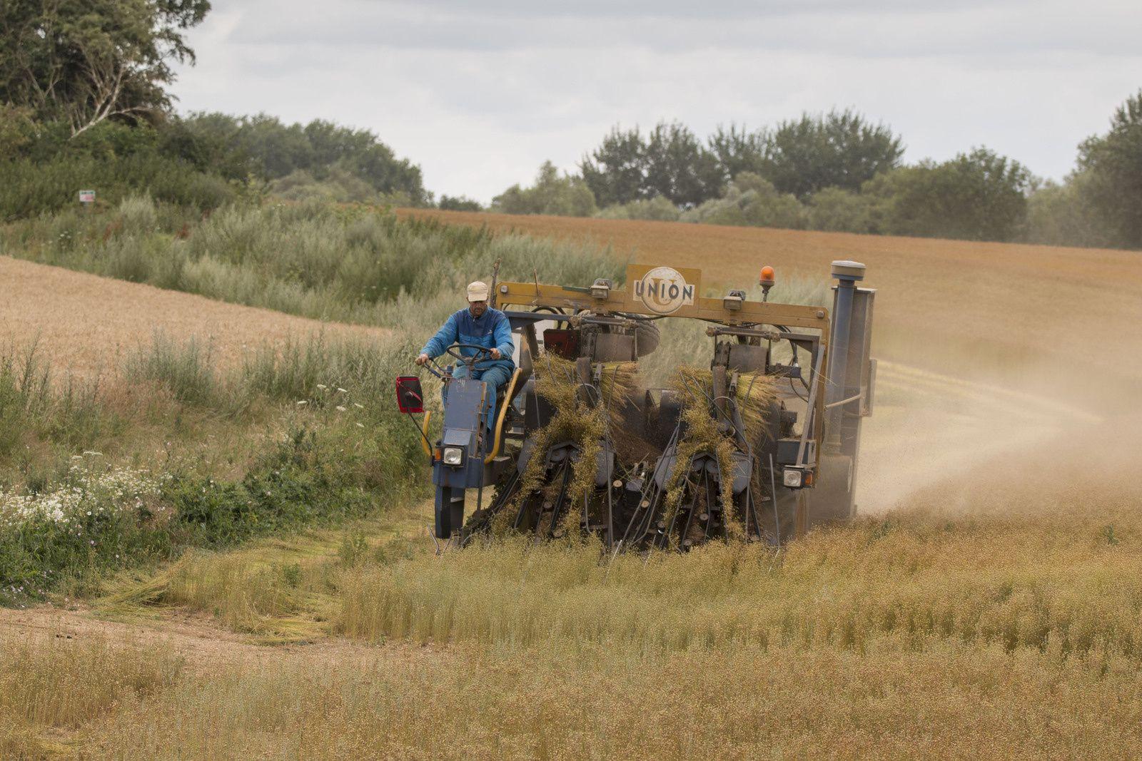 La récolte du champ de lin.