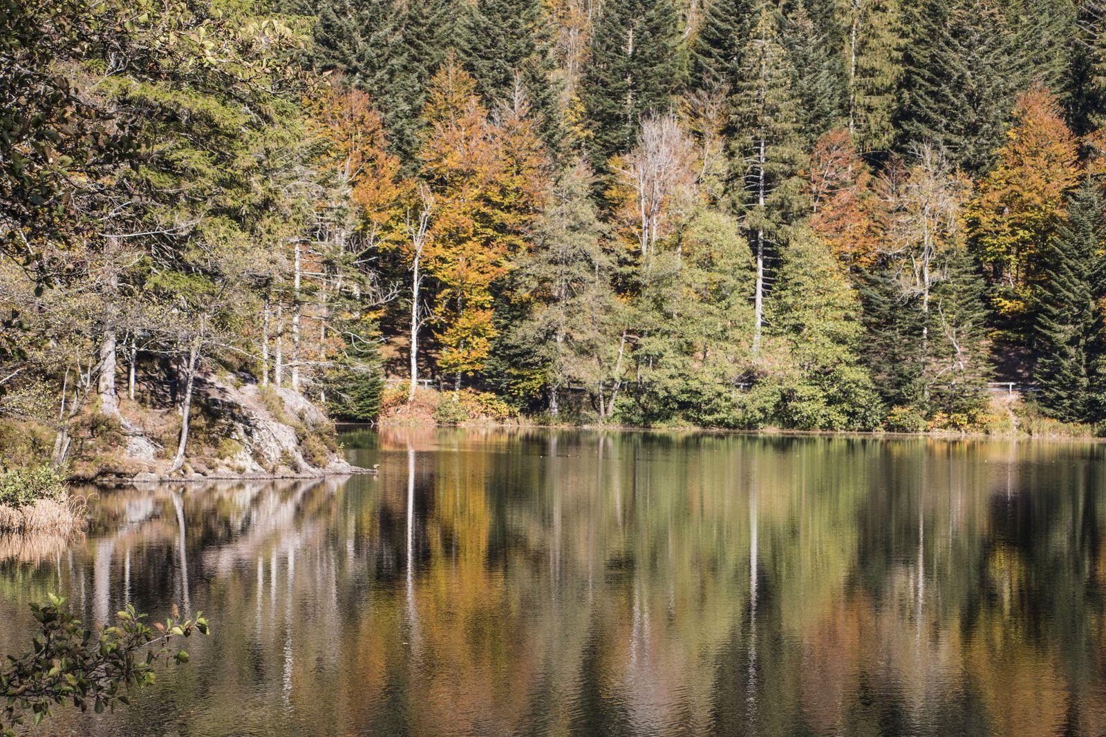 Couleurs d'automne dans les Vosges. (1)