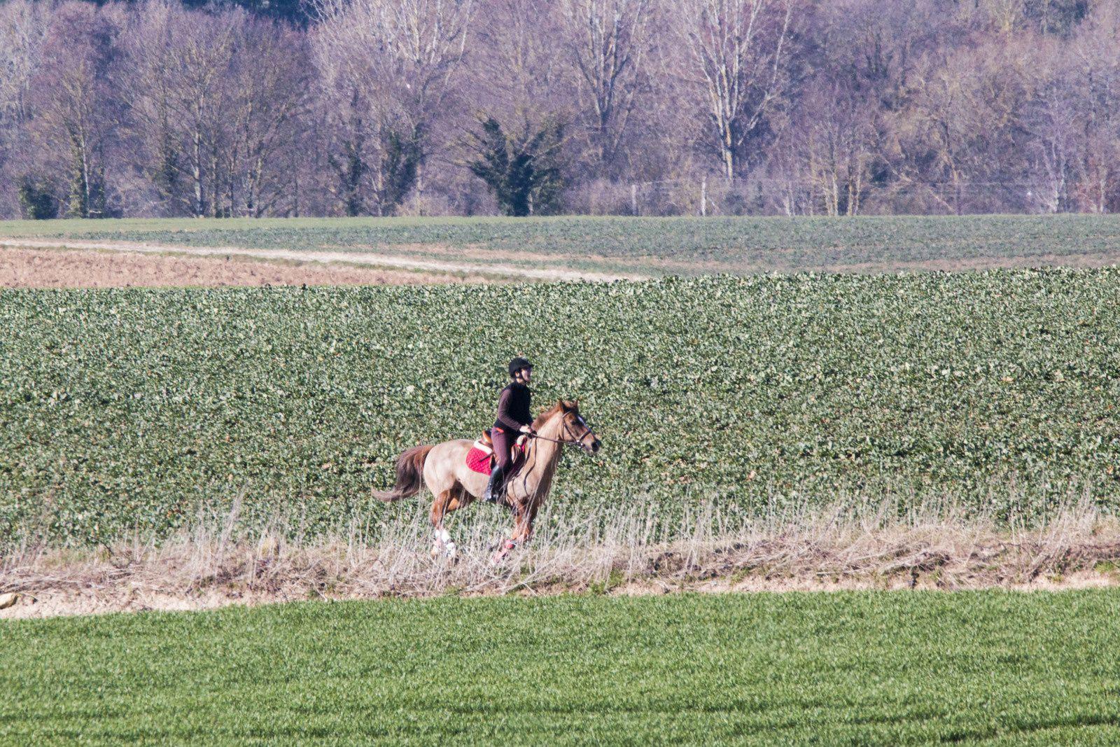Beauté singulière d'une cavalière et sa monture. Elle fait corps avec son cheval, tous deux sont en parfaite harmonie sur ce long galop. Un bel instant.