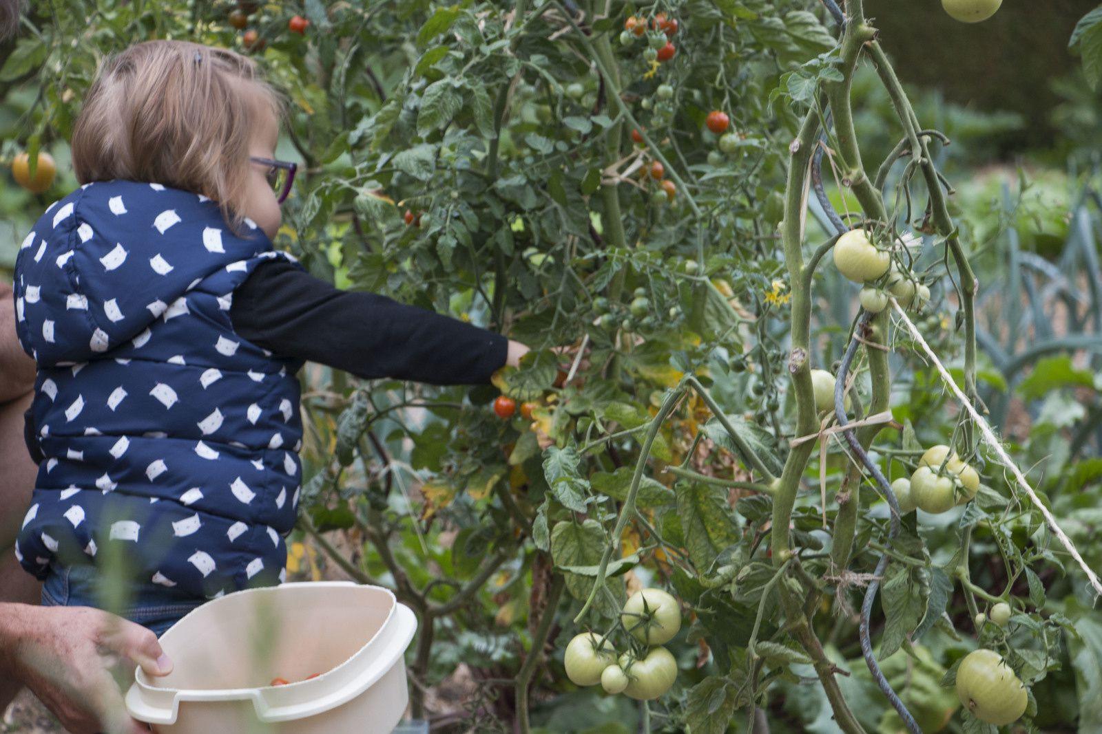Atelier senteur et cueillette au jardin.