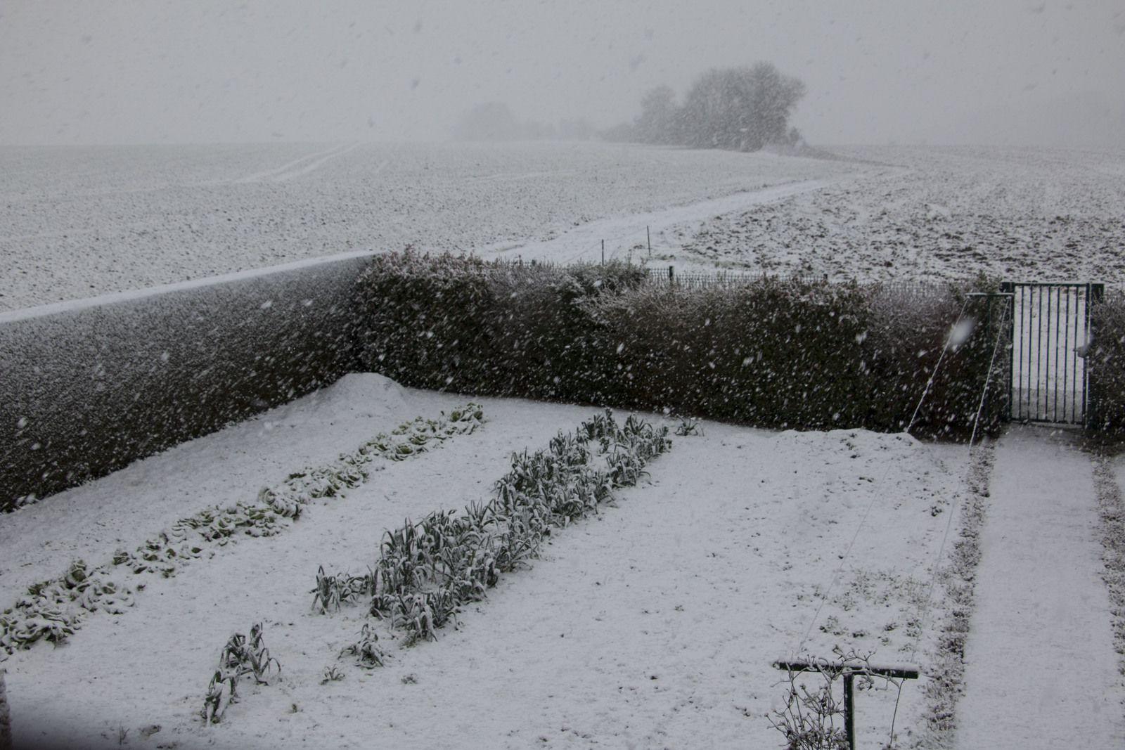 La neige blanchit peu à peu le jardin.