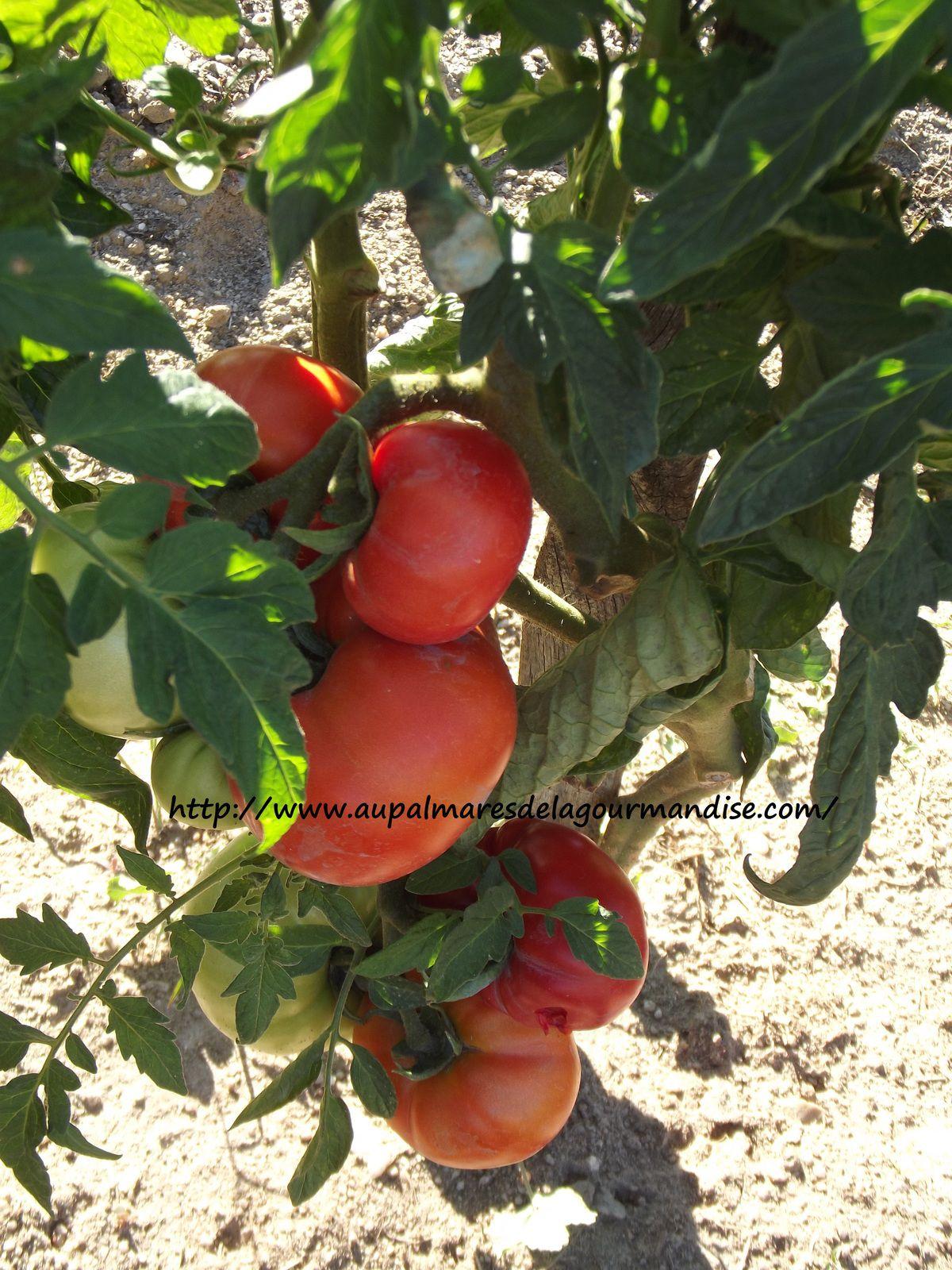Salade de pates* WW*  IG Bas * artichaut, féves ou pois chiche et légumes d'été  * Cookéo*