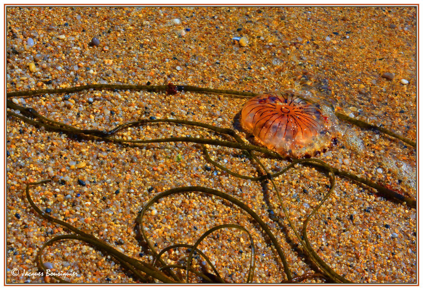 Piriac sur Mer, plage du VVF, le 30 juin 2013