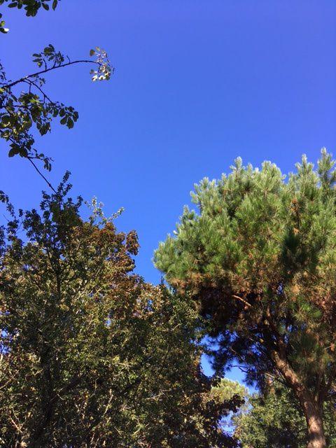 Ciel bleu dès le matin
