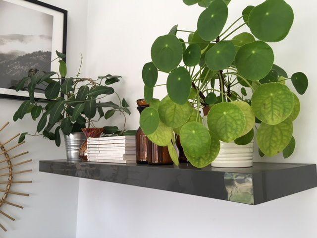 Mes plantes et moi...