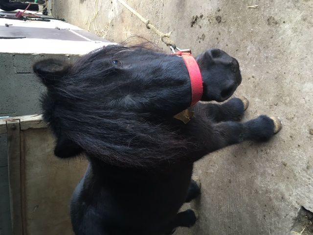 Le samedi c'est poney...il est pas trop chou celui là !
