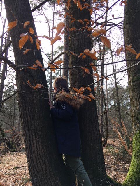 Une balade en forêt...