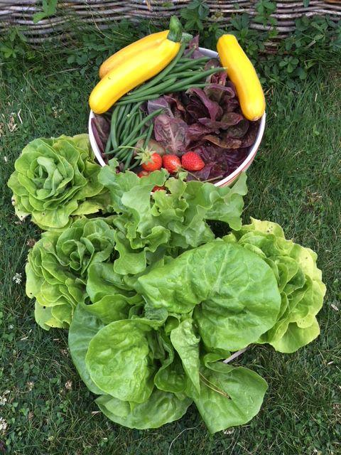 La récolte de nos potagers dans notre jardin