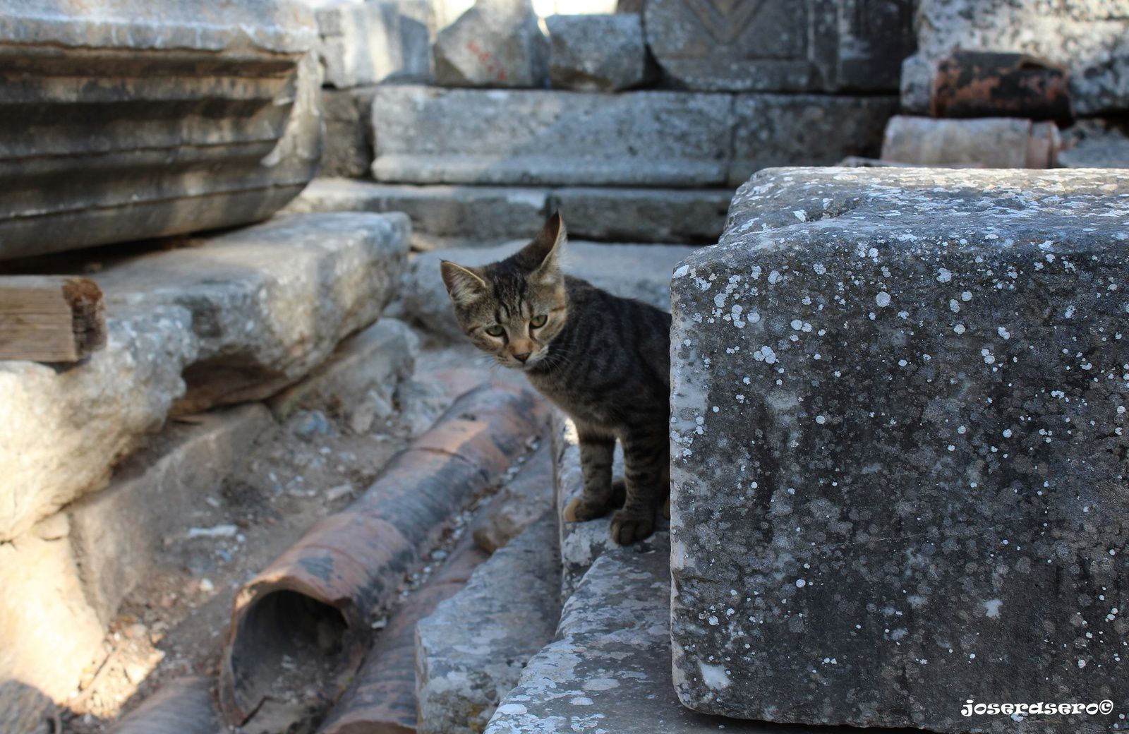 'Selçuk, Ephesus (Izmir)