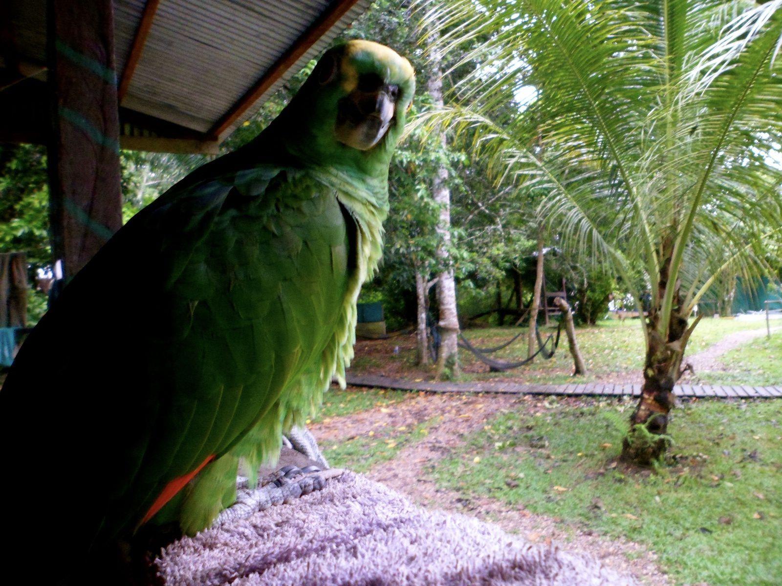 Vivre dans la forêt amazonienne : Mon expérience