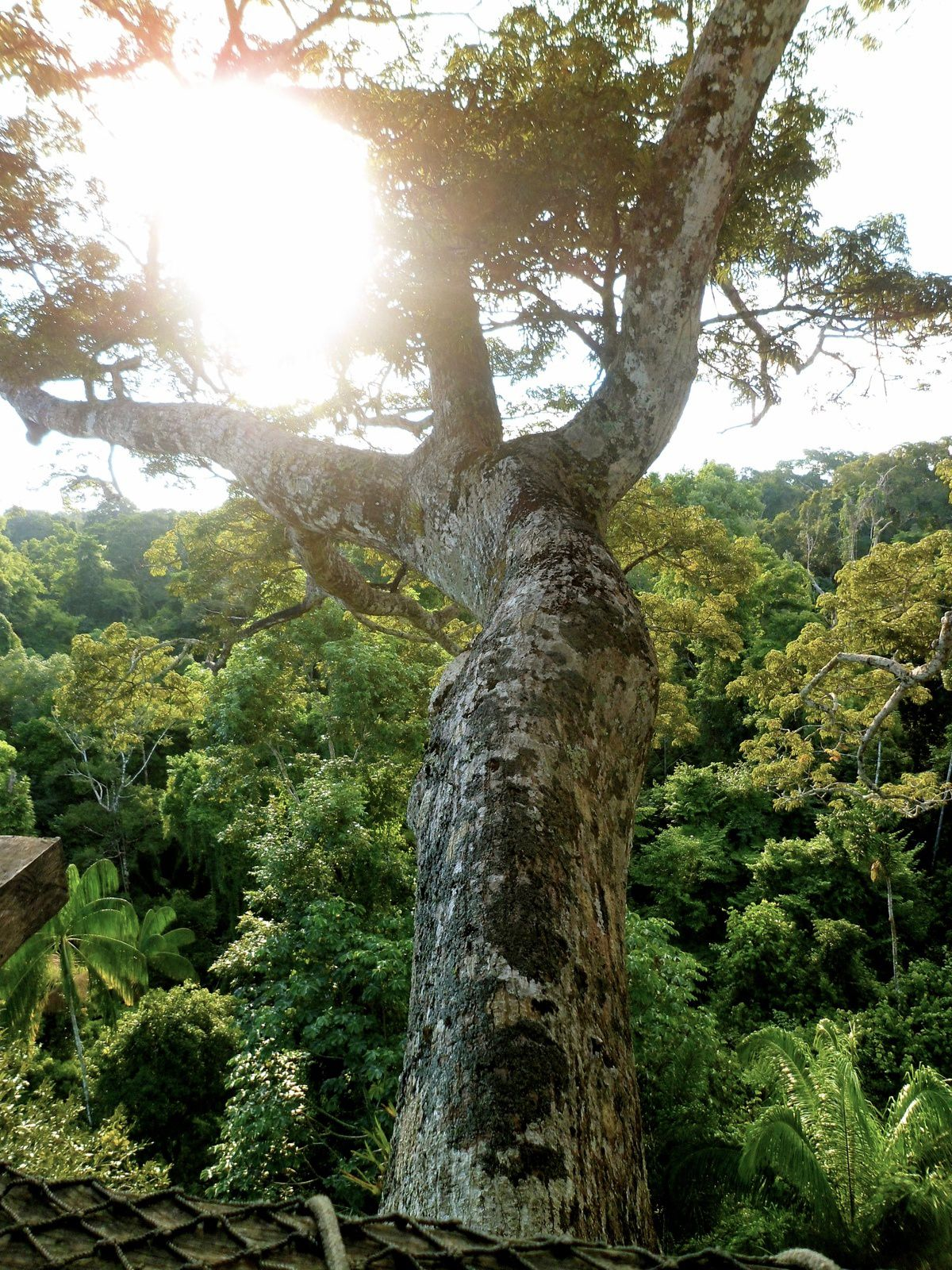 Devenir volontaire dans la forêt amazonienne péruvienne avec Kawsay Center