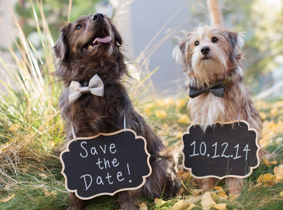save the date avec chien