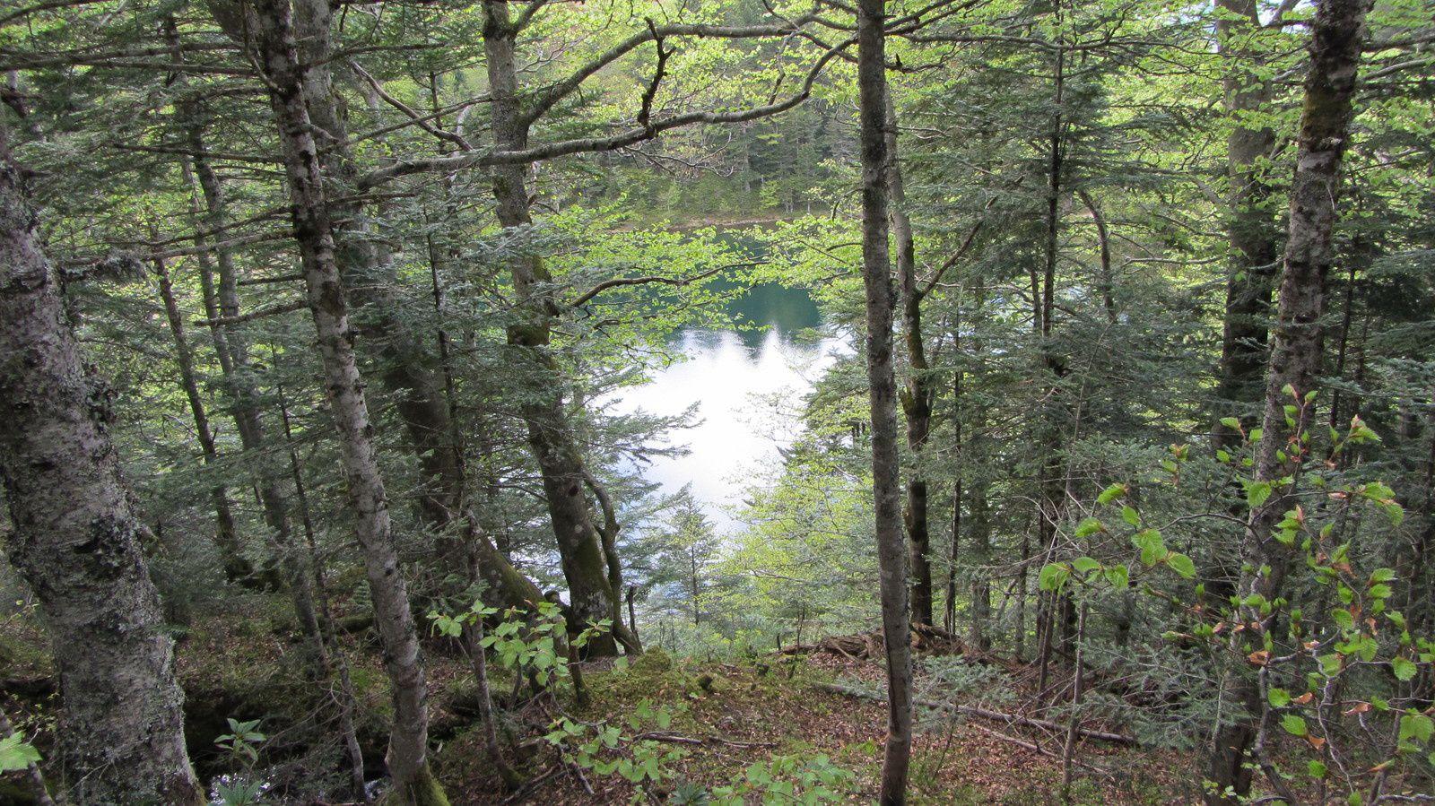 Cascade d'Ars et étang de Guzet