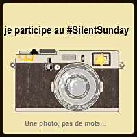 Silent Day #40