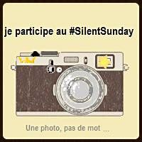 Silent Day #28