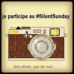 Silent Day #1