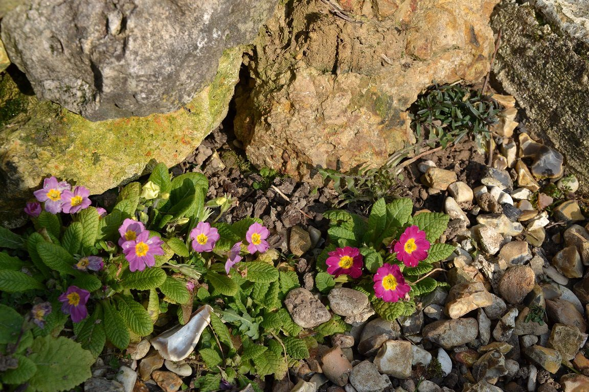 Soleil et jardin : enfin !