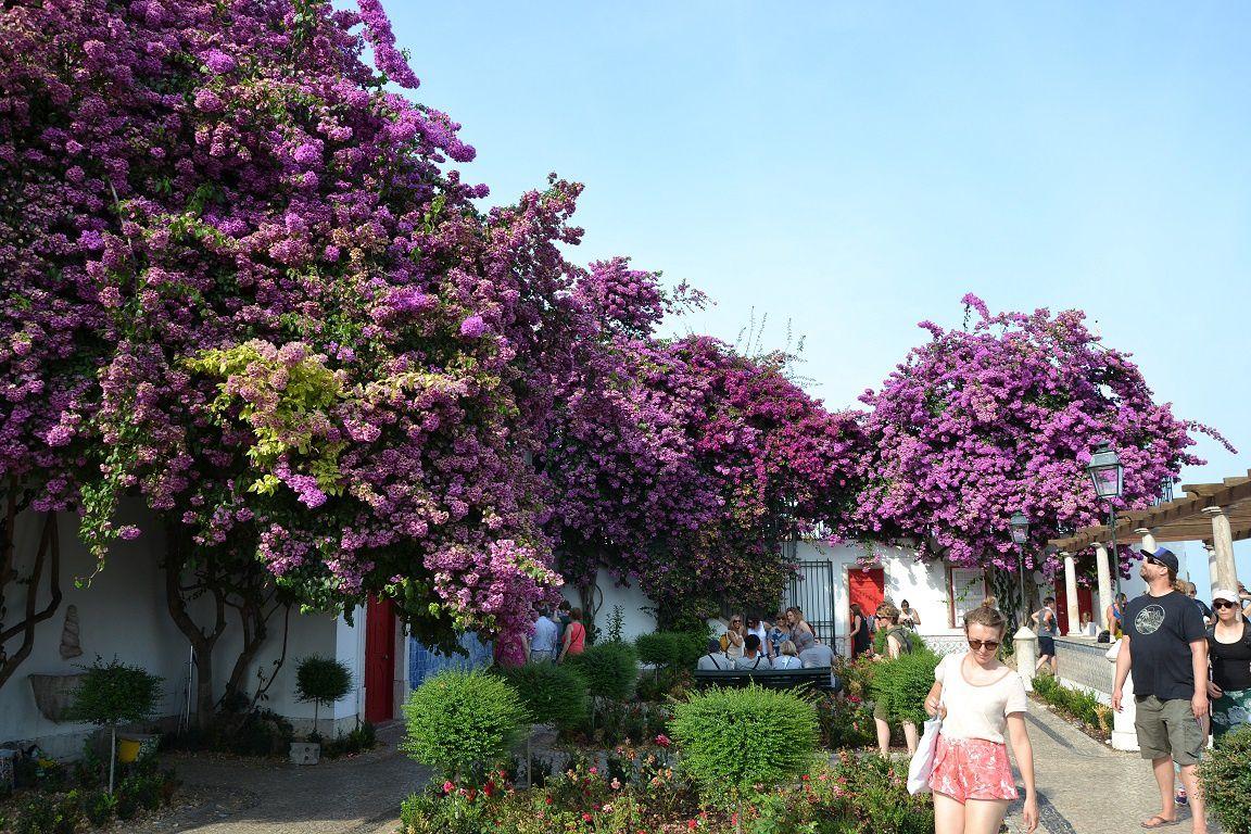 Lisbonne, côté jardin !