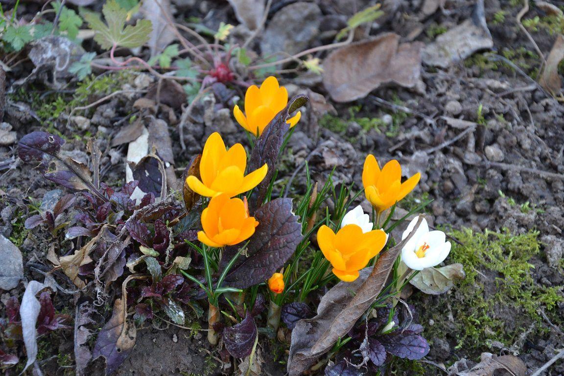 Comme un air de printemps...