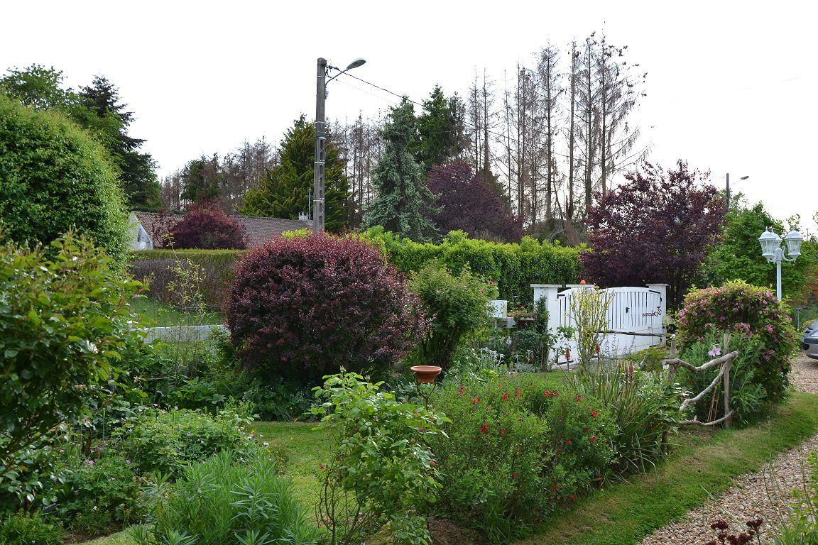 Jardin sous la pluie, jardin qui sourit...