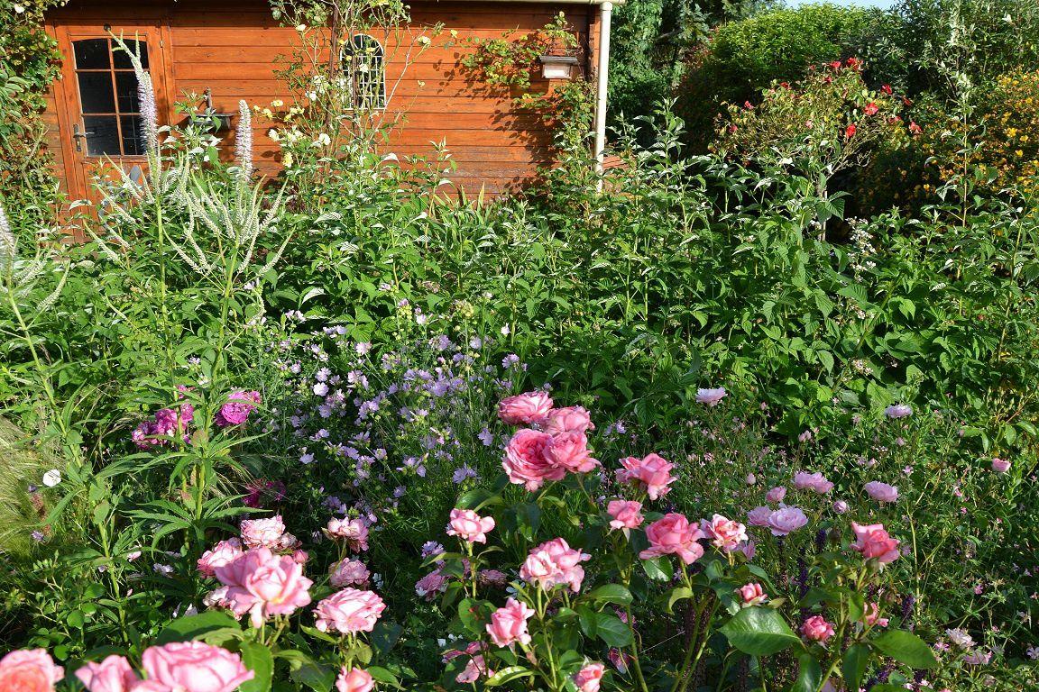 Le jardin fait son chaud ! (1)
