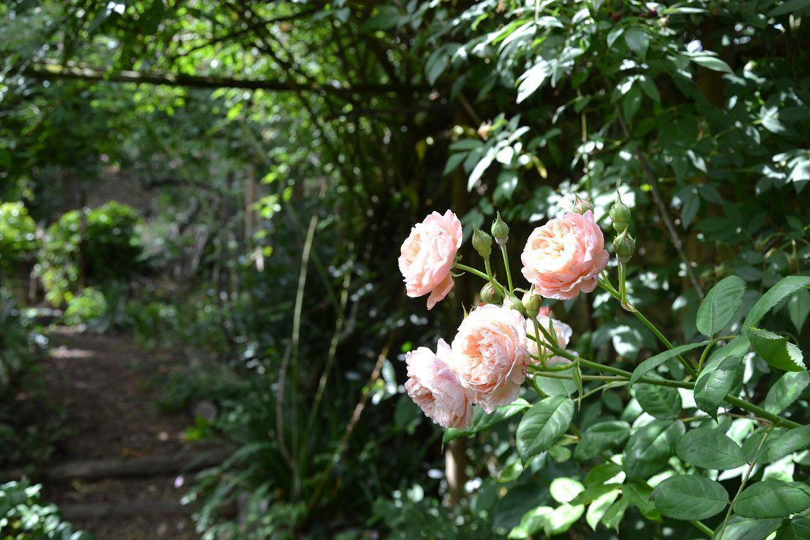 Visite du jardin privé d'André Eve