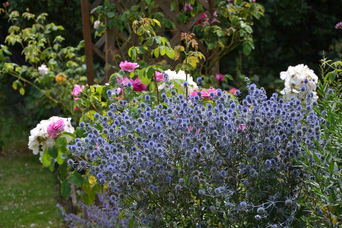 Dernier tour de jardin avant le Var !