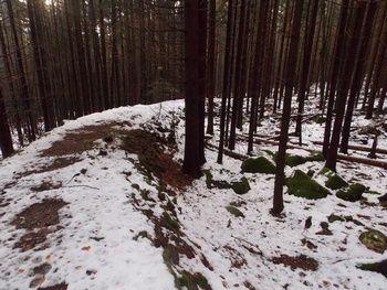 Le chemin de fer forestier de la forêt de Barr
