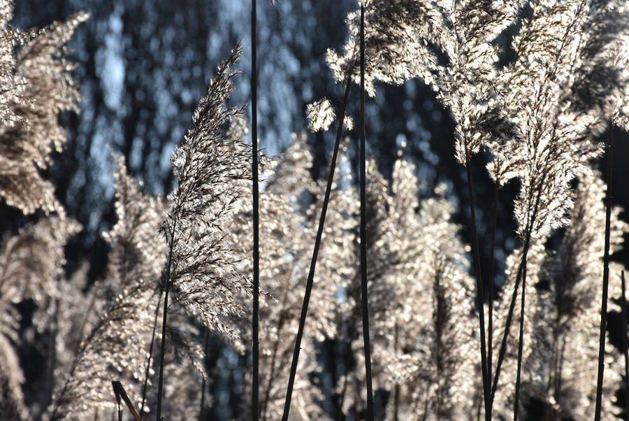 plumets glacés  ; photos de Victoria Lynn