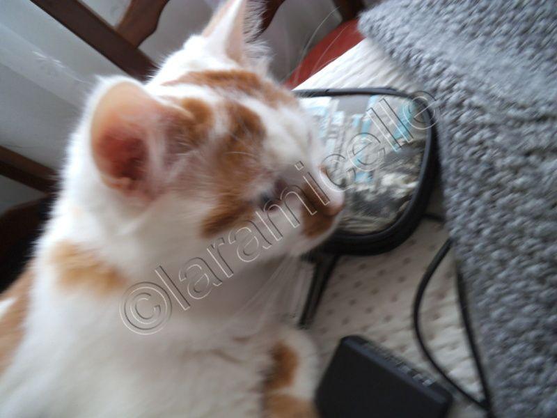tuto gratuit : sauver un  pull irlandais en mauvais état , troué par un chat