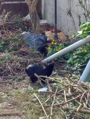dans mon jardin ; Victoria Lynn