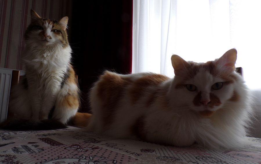 Didy et Lilou