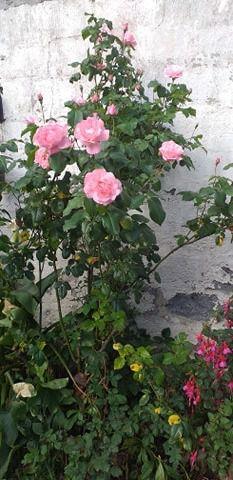 les fleurs de  mon jardin ; Victoria Lynn