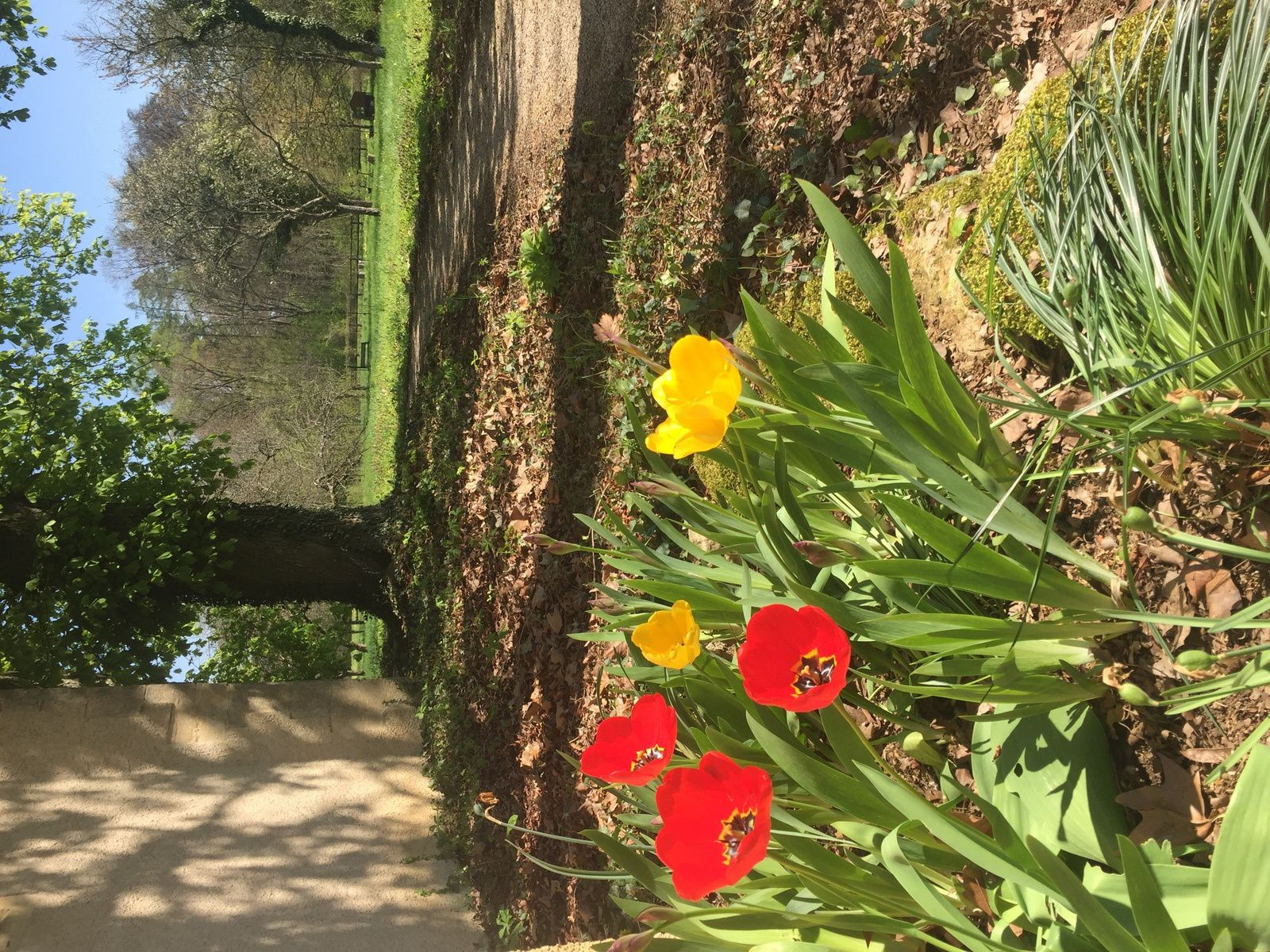 Jeudi saint : promenade dans Béthanie