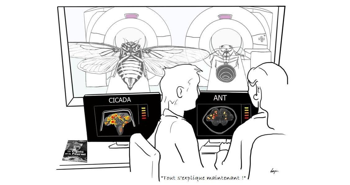Comment notre cerveau prend-il des décisions ?