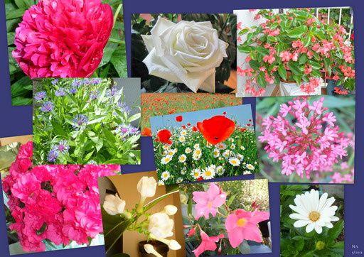 Quelques fleurs pour une bonne fête à toutes les mamans