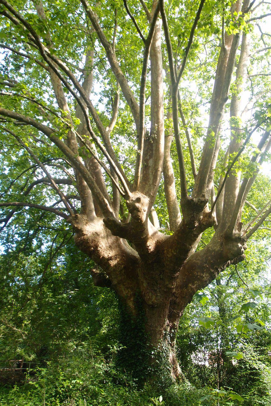 Une histoire d'arbre