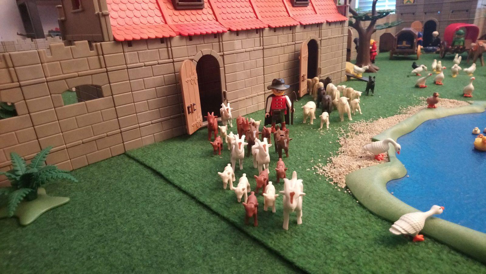 La bergerie se vide: chèvres et moutons prennent le chemin des prés tout proches